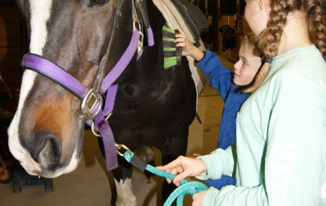 Horses of Hope: challenging therapy that changes lives