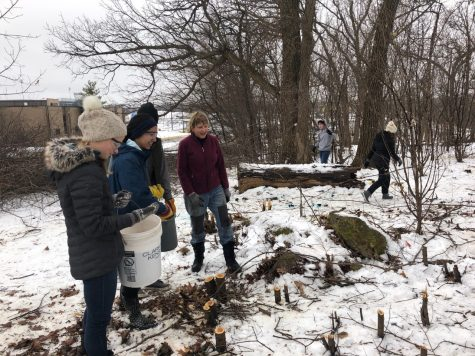 REACT club members spread seeds for native grasses with the guidance of Ancient Oaks, a community environmental group. Spreading seeds was just one part of the project, however, as it also included cutting buckthorn and clearing other invasive species, Paige Orals, 2020 graduate, says.
